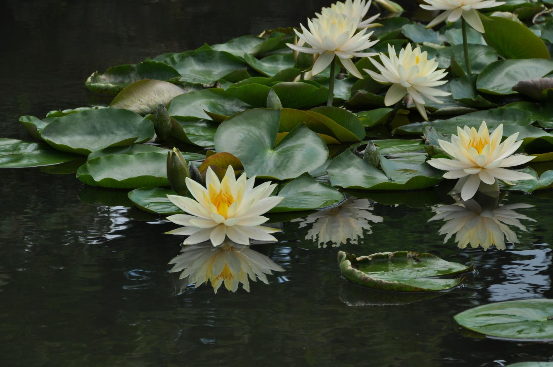 The Four Seasons of Ritsurin Garden-3