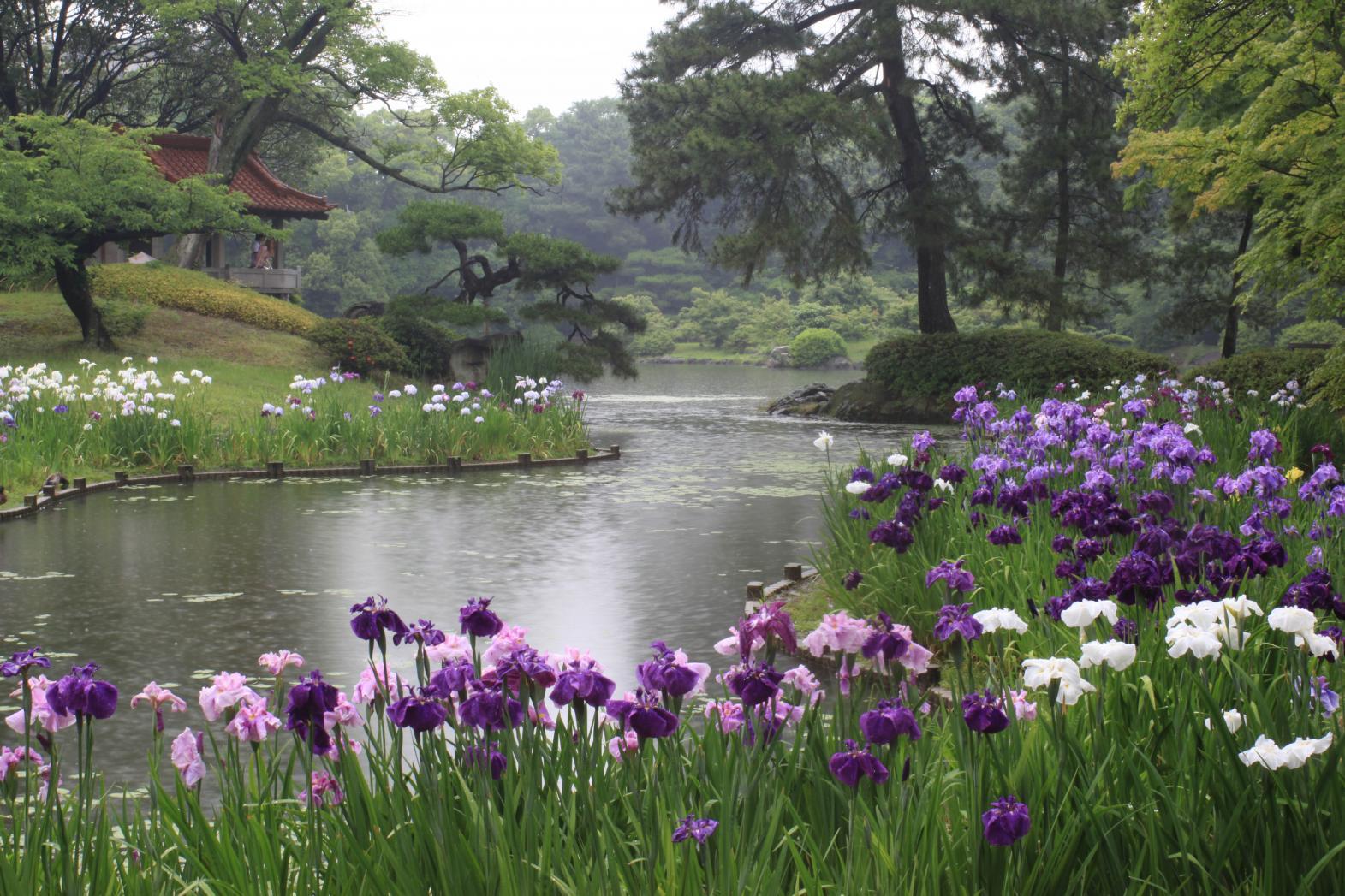 The Four Seasons of Ritsurin Garden-2