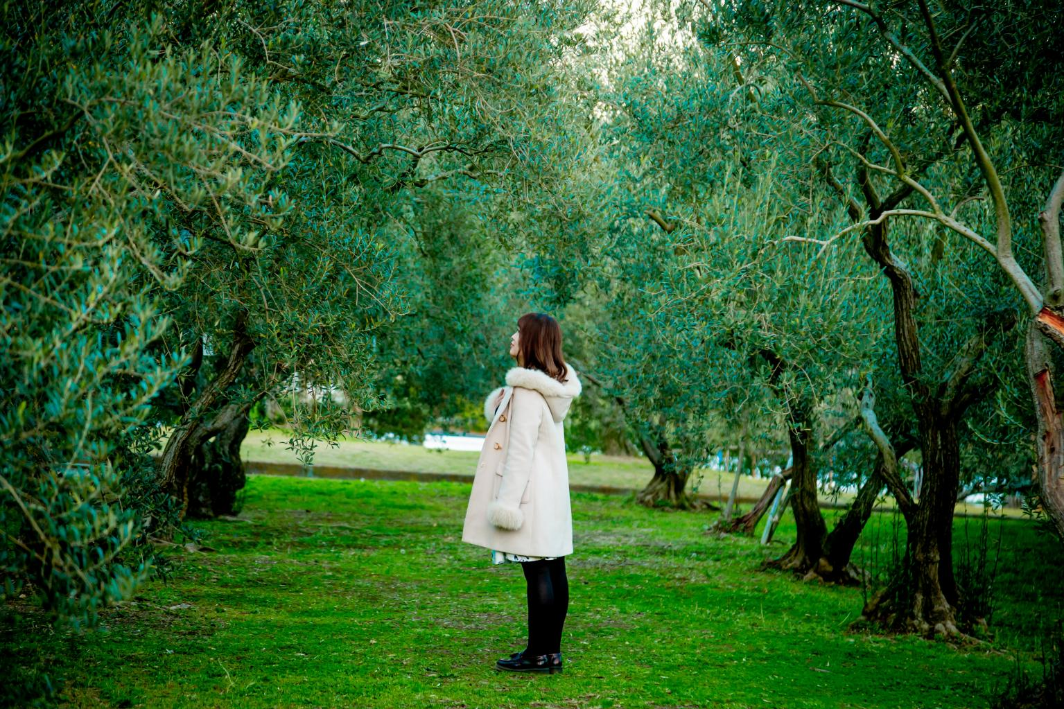 Shodoshima: Olives, Art, and Majestic Views-2