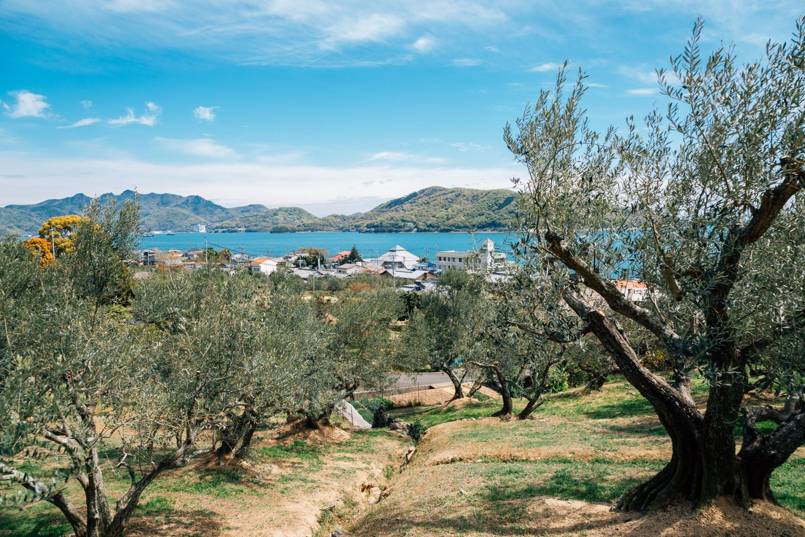 Shodoshima: Olives, Art, and Majestic Views-0