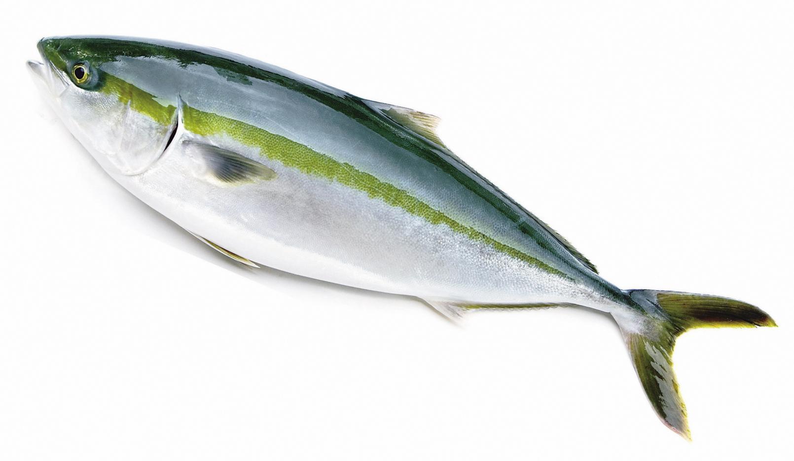 橄欖鰤魚-1