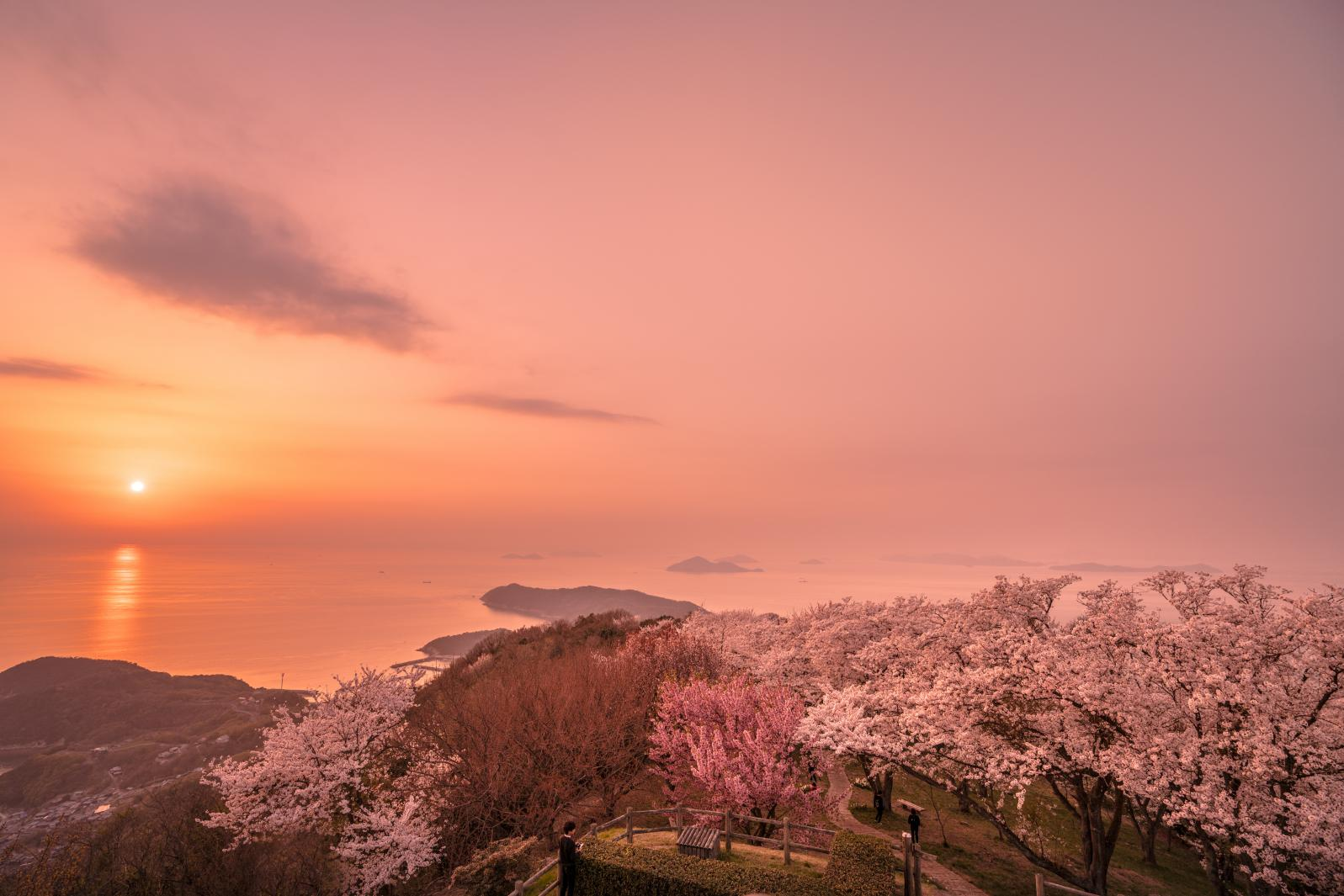Kagawa Prefecture: Flower scenery-1