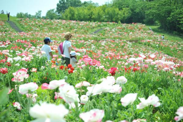 Sanuki Manno Park-1
